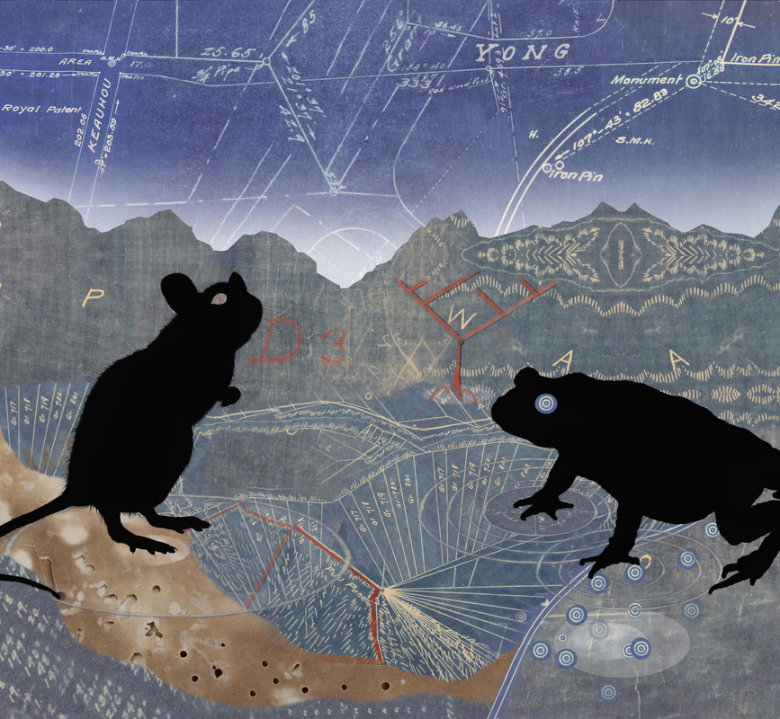 """Cane Toad and Roof Rat,"" digital collage, 40 x 37 inches, 2014"